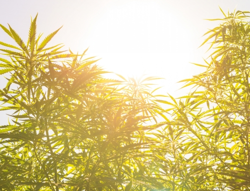 What the 2018 Farm Bill Means for Hemp and Cannabusinesses